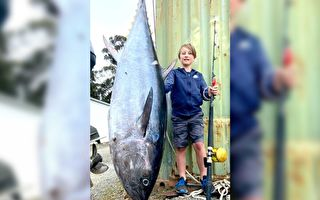 破紀錄 澳10歲男孩釣起88公斤重金槍魚