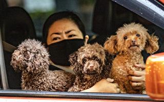 大流行社交疏远 越来越多人养宠物