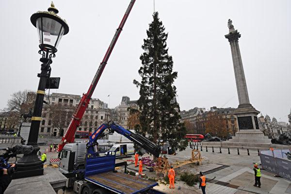 組圖:疫情下倫敦特拉法加廣場迎接聖誕樹