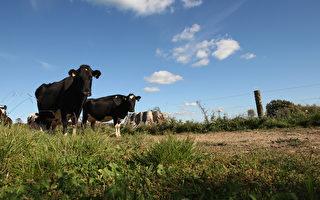 淡水改革可能使農業利潤每年減少83%