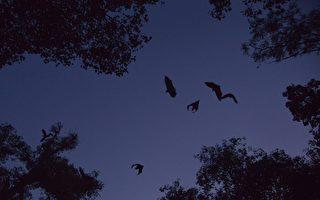 病毒溯源 中共为何阻外媒靠近云南蝙蝠洞