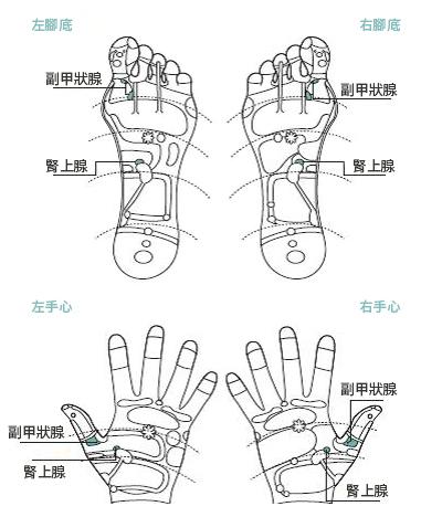 关节炎疼痛时可以用穴位按压舒缓,图为脚掌和手心反射区示意图。(采实文化提供)