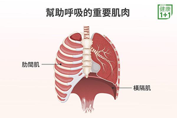 呼吸肌以橫隔肌為主,但如果想在運動時呼吸得更輕鬆,還要鍛鍊其它的呼吸輔助肌。(健康1+1/大紀元)