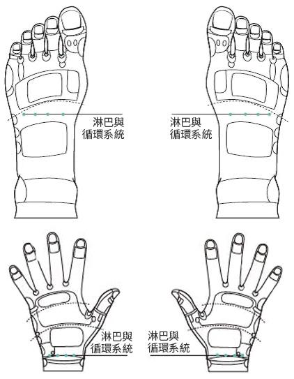 橘皮与下肢水肿时,按摩图上的脚背、手背反射区穴位。(采实文化提供)