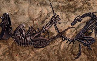"""同归于尽 两只""""决斗""""中恐龙化石出土"""