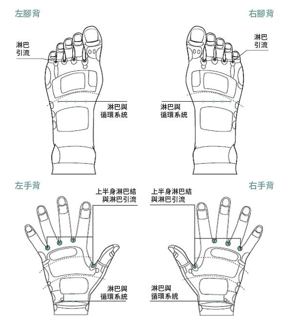 按压淋巴与循环系统的穴位,可以舒缓身体过敏现象,图为脚背和手背穴位。(采实文化提供)