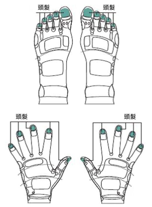 头发的反射区恰好就在指甲,图为足部和手部反射区。(采实文化提供/大纪元合成)
