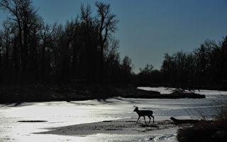 美国小鹿受困结冰湖面 被消防队员救起