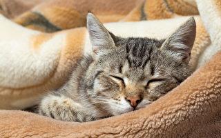 專業獸醫師:讓貓咪健康長壽的10個小祕訣