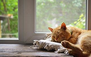 废物利用 帮猫咪布置多个舒适的空间
