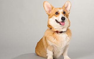 研究:愛犬的確能讀懂人意 但聽懂的詞彙少