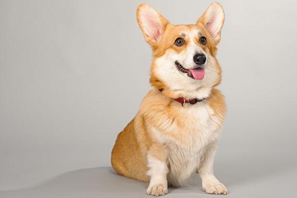 研究:爱犬的确能读懂人意 但听懂的词汇少