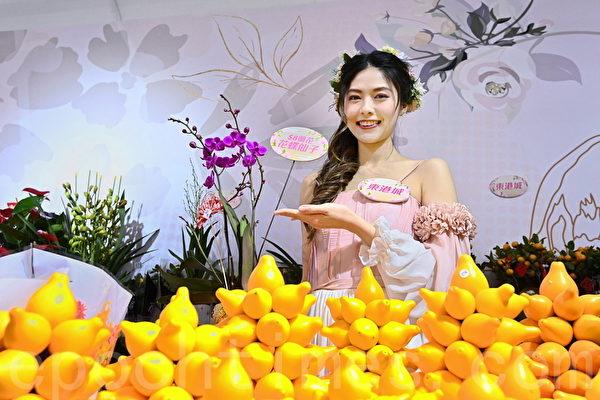 东港城推新年花市限定店 独家发售多款兰花