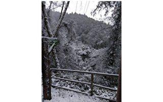 桃園拉拉山神木區飄雪  遊客賞雪樂農民憂農損
