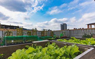 对抗热岛效应 新竹市力推建筑绿化有成