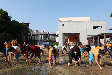 市長黃敏惠(右2)與北園國小校長吳長穎(左2)也參與種稻。