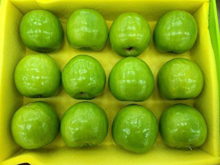 高雄市大社区苏信诚的冠军蜜枣为高雄12号-珍爱,果型硕大、外观翠绿。