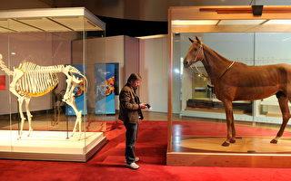 墨尔本博物馆野生动物标本展即将关闭
