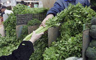 15万澳元芹菜烂在地里无人收 维州农民陷绝望