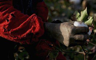 纽公司涉嫌销售强迫劳动所得的新疆棉制品