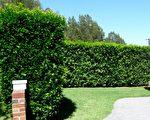 五个简单的保养工作 使花园更美丽