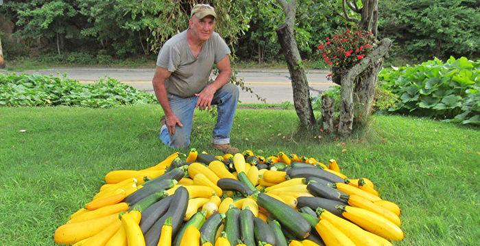 退休工程師種菜 向無家可歸社區贈送二萬磅
