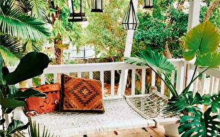 阳台轻改造 好看不乱的植物布置技巧