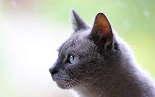 貨櫃從烏克蘭運往以色列 小貓受困3週沒死
