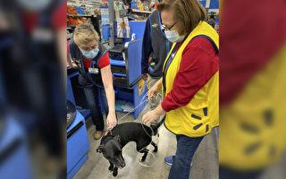 沃爾瑪團聚:失蹤三週的狗找到主人工作之地