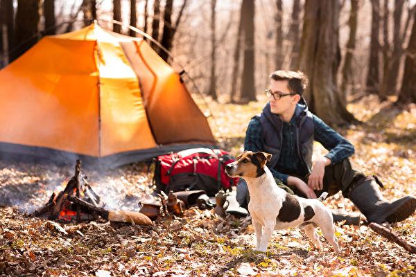露營,狗,Shutterstock,大自然