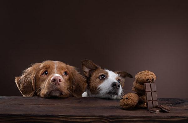 Shutterstock,狗