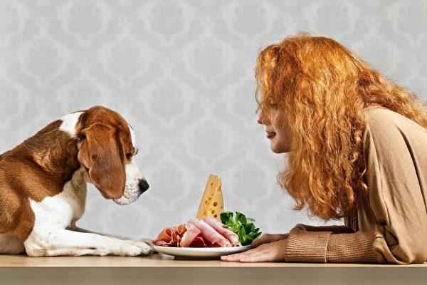 改善毛小孩肝病、肥胖问题 亲手做鲜食食谱