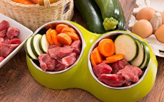 改善毛小孩口內炎、牙周病 親手做鮮食食譜