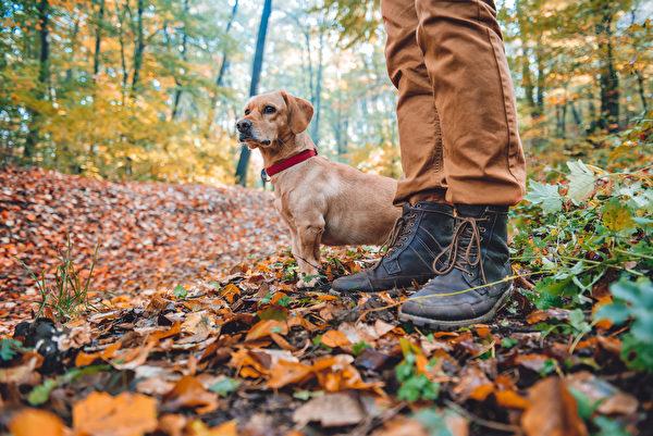 dog,Shutterstock