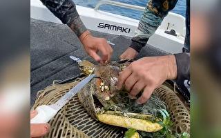 小海龜被漁網牢牢纏住 幸遇好心漁夫助脫困