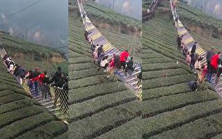 大年初二 宜昌網紅吊橋側翻 多人墜落茶園