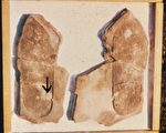 《轉法輪》中提及史前文明案例:三葉蟲