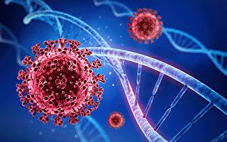 研究:中共病毒在慢性感染中更容易變異