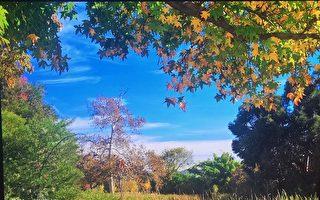 洪家栋镜头下的惠提尔公园 充满惊喜与感动
