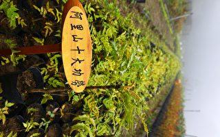 「以阿里山植物之名」植物  首波開賣