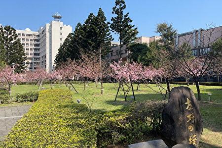 中大湖畔的河津櫻,以「友好之櫻」為地標。