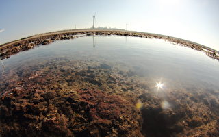桃园藻礁争议 林飞帆:不是环保和经济对抗