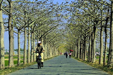 白河木棉花季开始了,目前约2成花况的景观。