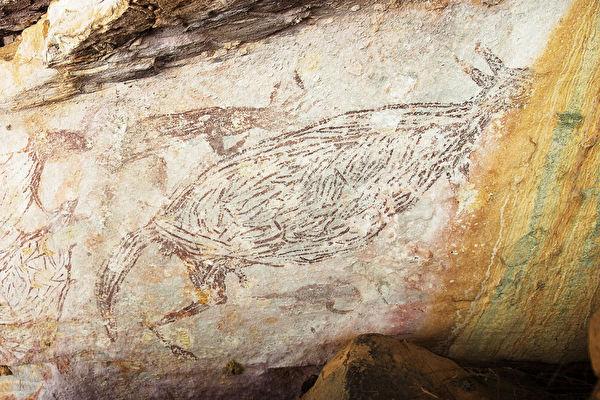 澳洲发现最古老岩画 1.73万年前的袋鼠