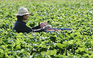 維州斥千萬鼓勵農場務工 申請者可獲2500元補貼