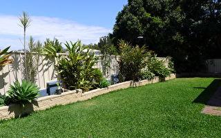 令人喜爱 但应避免种在宅院的五种植物