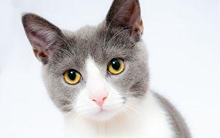 線上開庭 美國律師變「貓咪」爆紅網絡
