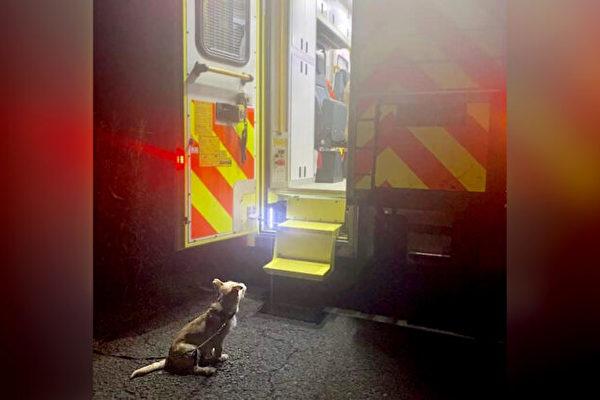 爱尔兰一主人掉进沟渠 狗狗叫警察寻求帮助