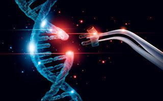 编辑紧凑基因段 TALEN比CRISPR更高效