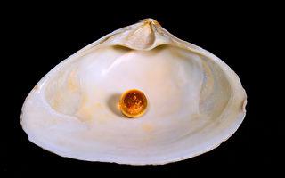 神秘老人托梦 泰国渔民捡到罕见橘色珍珠